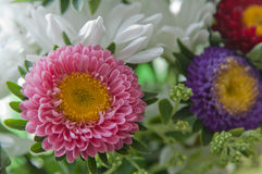 De bloemen van de zomer Stock Afbeeldingen