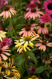 De Bloemen van de zomer Stock Fotografie