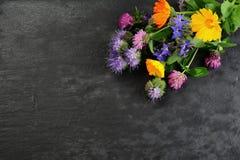 De bloemen van de zomer Royalty-vrije Stock Foto's