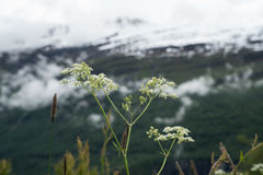 De bloemen van de zomer Royalty-vrije Stock Fotografie