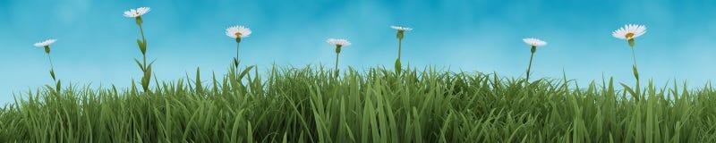 De bloemen van de zomer in bloei stock illustratie