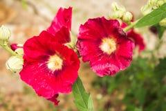 De bloemen van de zomer in de tuin Stock Foto's