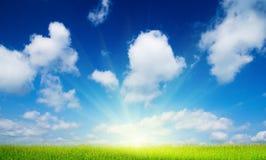 De bloemen van de zomer en blauwe hemel Royalty-vrije Stock Afbeeldingen