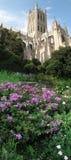 De Bloemen van de zomer en Nationale Kathedraal stock afbeeldingen