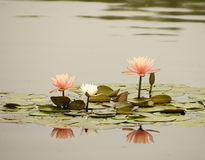 De bloemen van de zomer in volledige bloei Stock Afbeelding