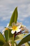 De bloemen van de zomergriekenland royalty-vrije stock foto's