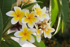 De bloemen van de zomergriekenland royalty-vrije stock afbeeldingen