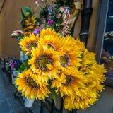 De bloemen van de zon stock fotografie