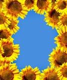De bloemen van de zon over hemel Royalty-vrije Stock Afbeeldingen