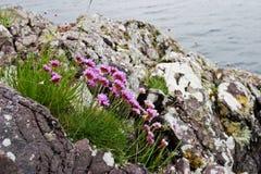 De bloemen van de zuinigheid stock fotografie
