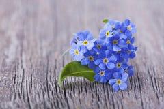 De bloemen van Forgetmenot Stock Foto's