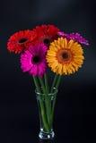 De Bloemen van Gerbera Stock Foto