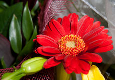 De Bloemen van Gerbera Stock Afbeelding