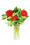 De bloemen van Gerbera Stock Afbeeldingen