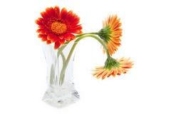 De bloemen van Gerbera in glasvaas die op wit wordt geïsoleerdi stock fotografie
