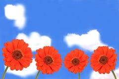 De bloemen van Gerbera op blauwe hemel Stock Afbeelding