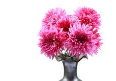 De bloemen van Guldaudi stock afbeelding