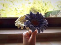 De bloemen van de handholding stock afbeelding