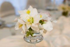 De bloemen van Hellebore Stock Fotografie