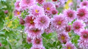 De bloemen van de herfst Vector vakantiekaart stock videobeelden