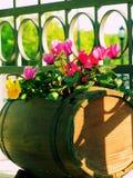 De bloemen van het balkon Stock Afbeeldingen