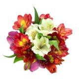 De bloemen van het boeket Stock Fotografie