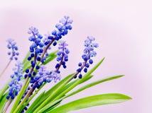De bloemen van het bos Stock Afbeelding