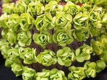 De bloemen van het document Stock Fotografie