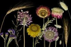 De bloemen van het gebied Stock Afbeelding