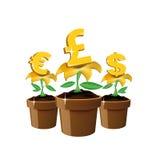 De bloemen van het geld Stock Foto's