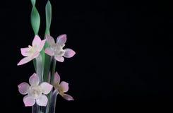 De Bloemen van het glas stock foto's