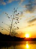 De Bloemen van het gras Royalty-vrije Stock Foto's