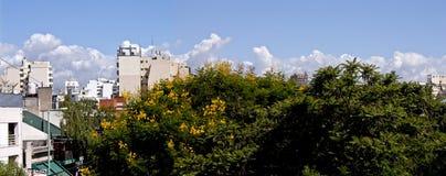 De bloemen van het Ibirapitabroodje in een luchtpanorama van de stadshemel van Buenos aires stock afbeelding