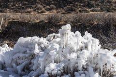De Bloemen van het ijs Stock Foto