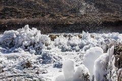 De Bloemen van het ijs Royalty-vrije Stock Afbeelding