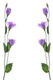 De bloemen van het kaartontwerp het in de schaduw stellen Stock Afbeelding
