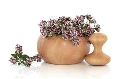 De Bloemen van het Kruid van de marjolein stock afbeeldingen