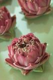 De bloemen van het kuuroord Royalty-vrije Stock Afbeelding