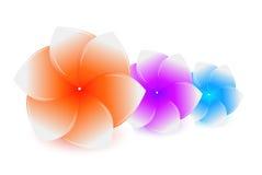De bloemen van het kuuroord Stock Foto