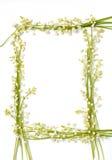 De bloemen van het lelietje-van-dalen op document frame geïsoleerdeo grens backgr Stock Foto