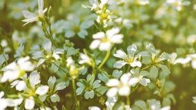 De bloemen van het schoonheidsmadeliefje Stock Afbeeldingen