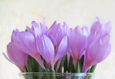 De bloemen van het sneeuwklokje royalty-vrije stock foto's