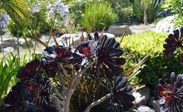 De bloemen van het tuingebied Stock Fotografie