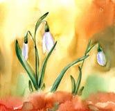De bloemen van het waterverfsneeuwklokje De lentebeeld met witte bloem royalty-vrije illustratie