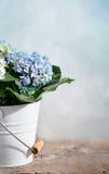 De Bloemen van Hortensia Royalty-vrije Stock Foto's