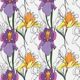 De bloemen van de iris royalty-vrije illustratie
