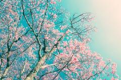 De bloemen van de kersenbloesem op de uitstekende achtergrond van de stijlaard Royalty-vrije Stock Afbeeldingen