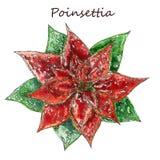 De Bloemen van Kerstmispoinsettia, Rode Bladerenwaterverf Hand het Schilderen Boeket Botanische Tekening Illustratie voor groet Royalty-vrije Stock Afbeeldingen