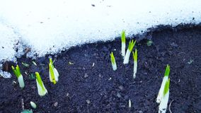 De bloemen van de lente in de tuin stock foto's