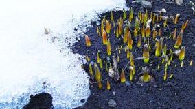 De bloemen van de lente in de tuin royalty-vrije stock foto's